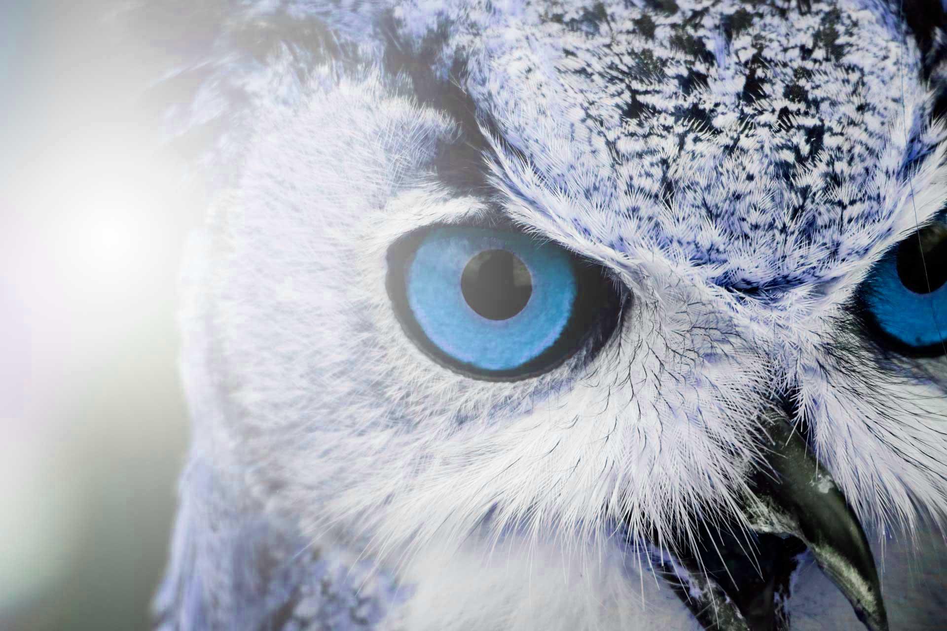 Buho Azul